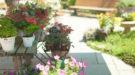 一戸建ての庭を美しく!ガーデニングの基本を学ぼう